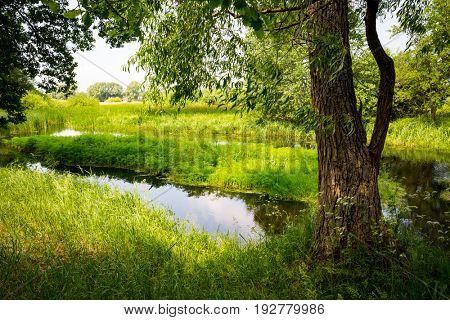Summer scene on small river