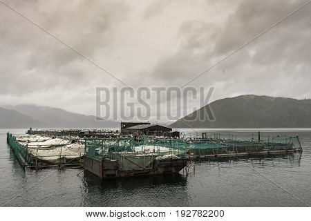 Picton New Zealand - March 12 2017: Wide shot of entire King Salmon farm in Ruakaka Bay under cloudy sky full of rain. Industrial installation with pens and nets above sea water. Mountains in back.