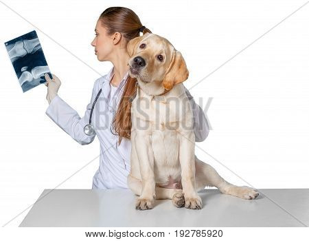 Young dog vet x-rays veterinarian white background