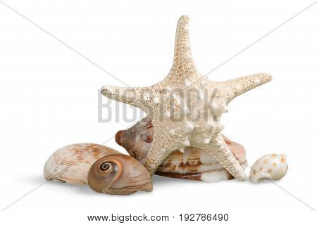 Isolated star starfish shells color white background