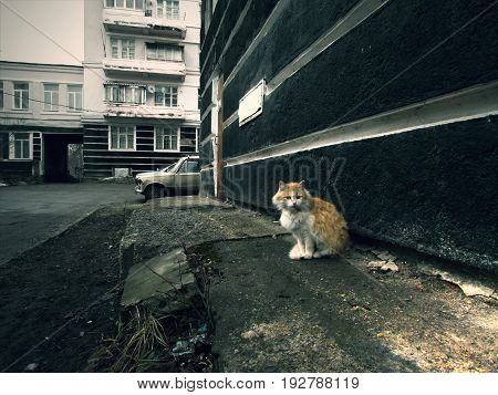 animal, cat, street, cute, sadness, sorrow, autumn, dullness, slush