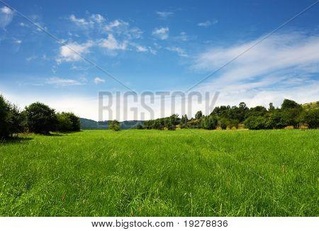 Grassland,nature background
