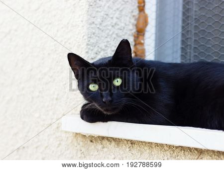 Portrait of black cat at summer day