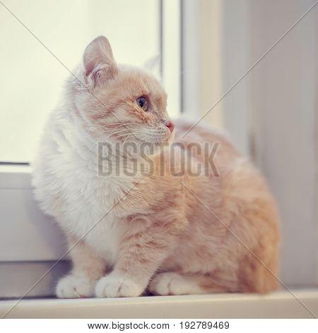 Red tabby kitten sits on a window sill