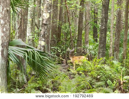 HDR Photo image of a Deer in the forest