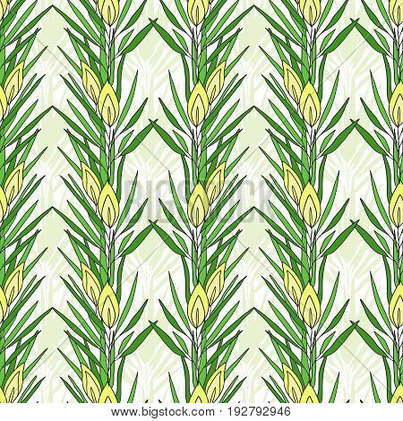 Seamless pattern with rooibos plant. Herbal tea packaging design. Vector nature print