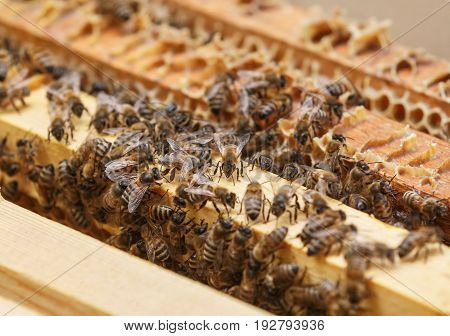 Many bees crawl on the frames with honey in the hive