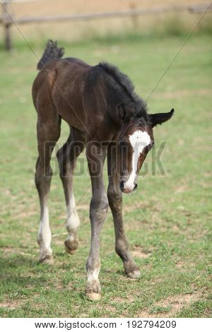Nice Foal On Pasturage