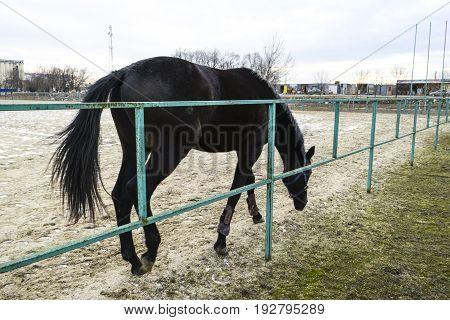 The Horse Walked Around The Stadium