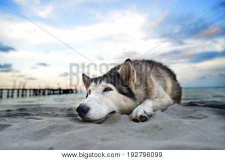 Siberian Relax