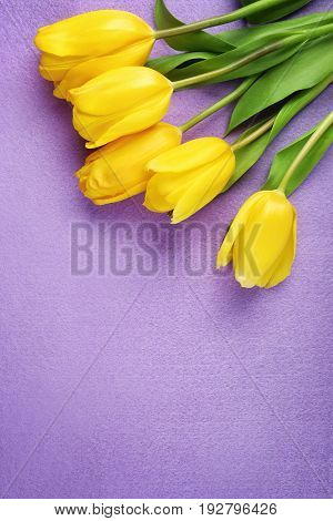 Beautiful fresh tulips on lilac color background