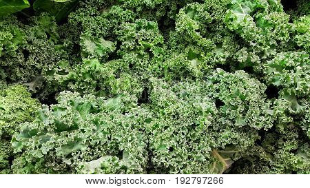 Raw fresh cut green kale from the market