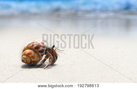 Alone hermit crab walking on the beach.