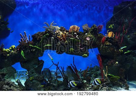 Tropical fish swimming near colorful corals, stones and rock in big aquarium, diving, nature background, wildlife