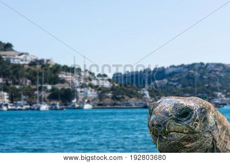Giant turtle in front of blue sea in a book background intentional blur.