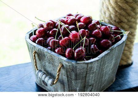Cherry Basket. Cherry Tree Branch. Fresh Ripe Cherries. Sweet Cherries In Garden