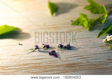 Summer flowers on blue wooden boards in the sunlight
