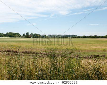 Open Farmers Field Growing Full Of Crop