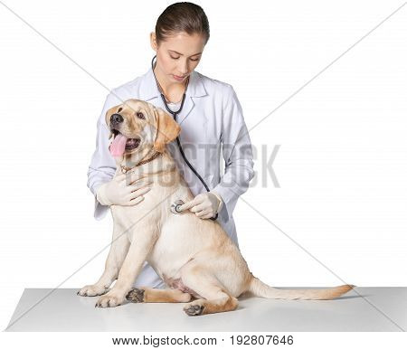 Young dog vet veterinarian white background small