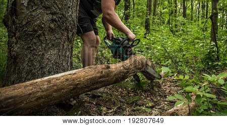 A man with a chainsaw cuts a tree in the forest closeup