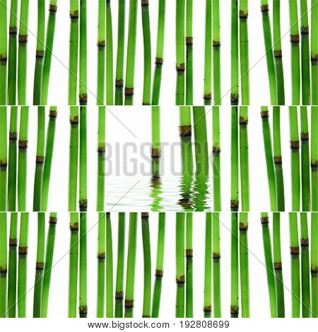 Still life with collage of young bamboo sticks