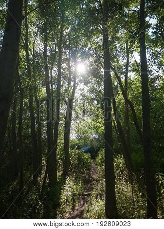 Sunny Day Sun Coming Through Trees In Forest