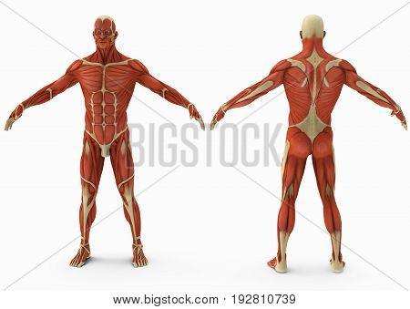 Male without leather front view and back view . 3d illustration