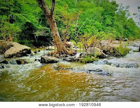 A rocky river with a crooked tree and small waterfalls spilling into a natural pool.