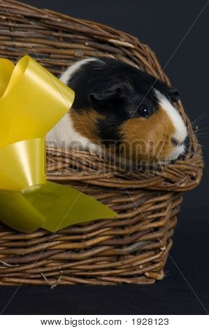 Pig In A Basket
