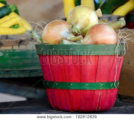 raw onions in red bushel basket at the market