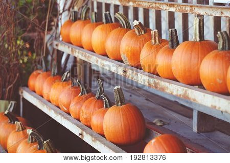 Fresh harvest farm pumpkins on shelf in market place Halloween and Thanksgiving concept closeup macro still life texture wallpaper background toned with film retro filters