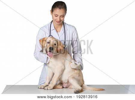 Young dog injecting vet veterinarian white background