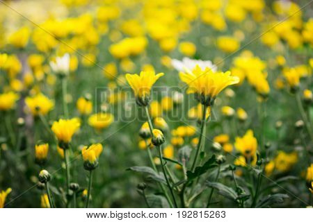 blurred image of flowers with abstract bokeh blackground