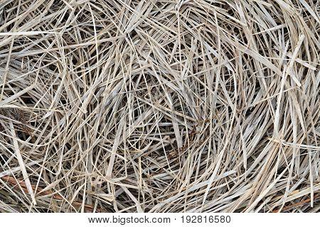 Dry field grass lying circles closeup background