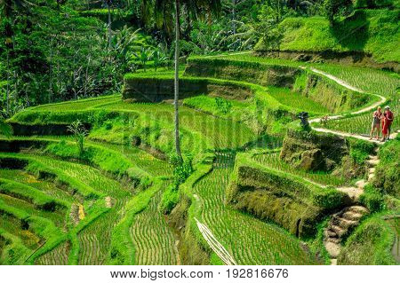 BALI, INDONESIA - APRIL 05, 2017: An unidentified people looking the most dramatic and spectacular rice terraces in Bali can be seen near the village of Tegallalang, in Ubud Indonesia.
