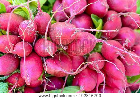 close up view of radish bunch at the market