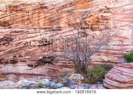 Dead Tree And Rock Wall In Red Rock Canyon
