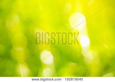 glitter nature greenery color, bokeh soft color filter for abstract background