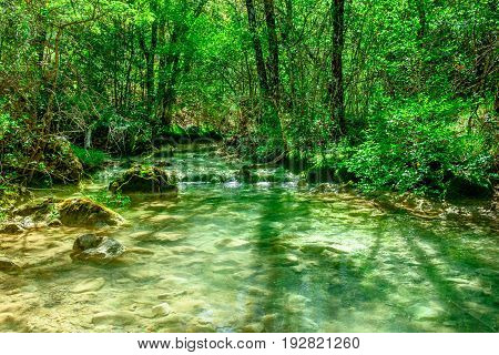 Stream in a french forest at springtime