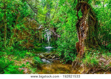 Waterfall from a stream in a french forest at springtime