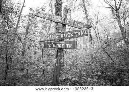 Trail signs point in different directions in the forest, black and white