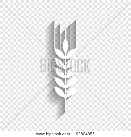 Wheat sign illustration. Spike. Spica. Vector. White icon with soft shadow on transparent background.