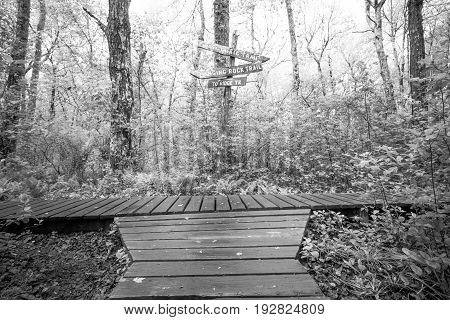 Wooden paths intersect in the forest, black and white