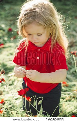 small boy or child with long blonde hair in red shirt in flower field of poppy on natural background summer spring childhood and happiness opium ecology and environment