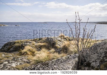 Small tree and grass on the rocky shore of the lake in the background can be seen the island sky and clouds. On a sunny spring day.
