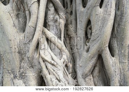 dry tree bark texture background, close up