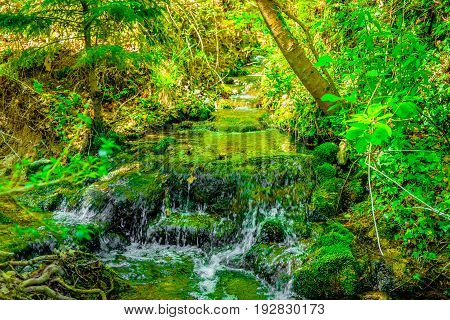 Brook in spring in a french forest