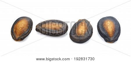 Dry watermelon seed isolate on white background