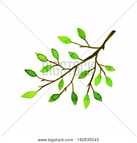 Branch of a deciduous tree. Watercolor hand-drawn illustration on a white background