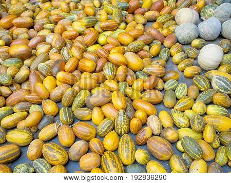 Indian pumpkin, stripy yellow sambar, malabar cucumber, varieties of nightshade vegetables harvested for cooking